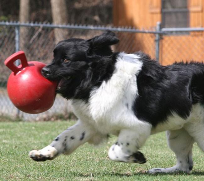 Jolly Tug-n-Toss Ball Medium (15 cm) voor honden