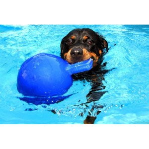 Jolly Tug-n-Toss Large (20 cm) voor honden