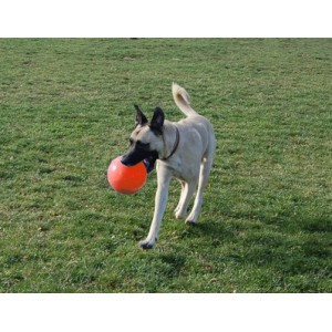Jolly Ball Bounce n Play large (20 cm) voor honden Rood