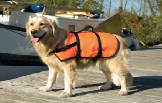 Zwemvest XS voor de hond