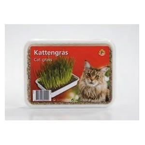 Kattengras voor de kat