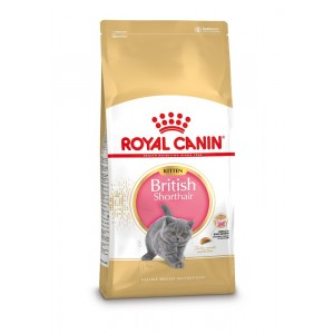Royal canin british shorth kitten
