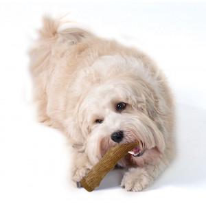 Petstages Dogwood Stick voor honden