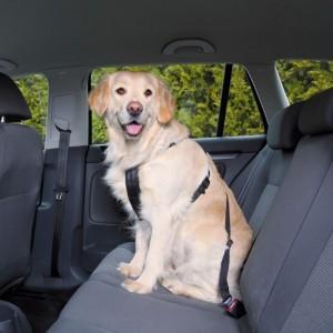 Wandel- en Autoharnas met Gordel voor de hond