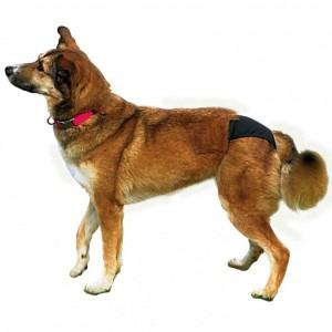 Loopsheidbroekje S voor de hond