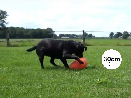 Dog Comets Pan-Stars - Speelbal 30cm