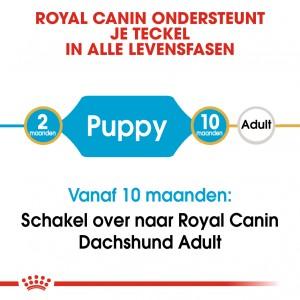 Royal Canin Puppy Dachshund (Teckel) hondenvoer