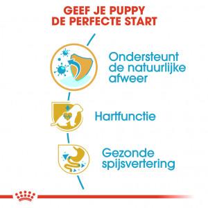 Royal Canin Puppy Cavalier King Charles hondenvoer
