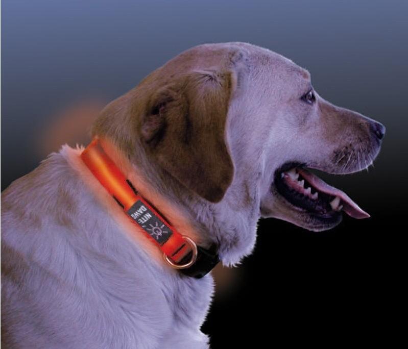 NiteDawg Lichtgevende Halsband voor de hond