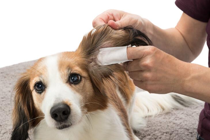 Oorreiningingsvingerlingen voor honden en katten 50St.