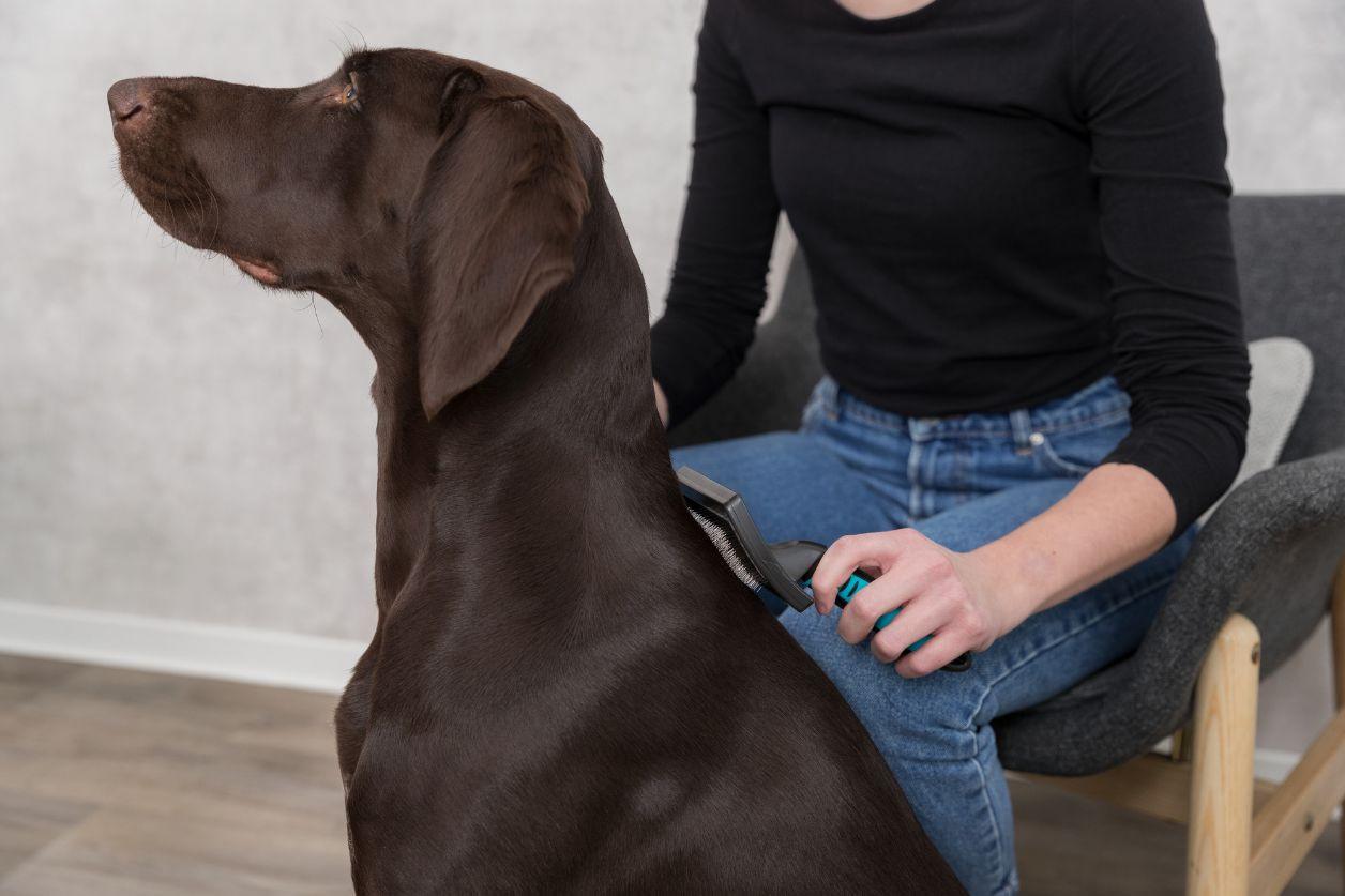 Slickerborstel Groot voor de hond