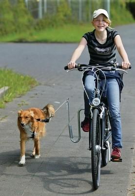 Springer fietsbeugel voor de hond