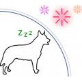 Vuurwerk: Anti stress hond