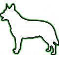 Huid- en vachtproblemen hond