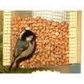 Soorten voer vogels