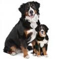 Levensfase hondenvoer