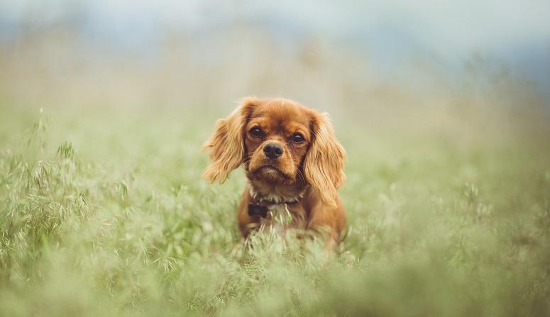 Hat Mein Hund Einen Gesunden Stuhlgang Brekz De